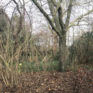 Cohousing Burcht in Antwerpen natuur